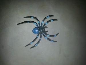 Edderkoppen i samlingsboksen